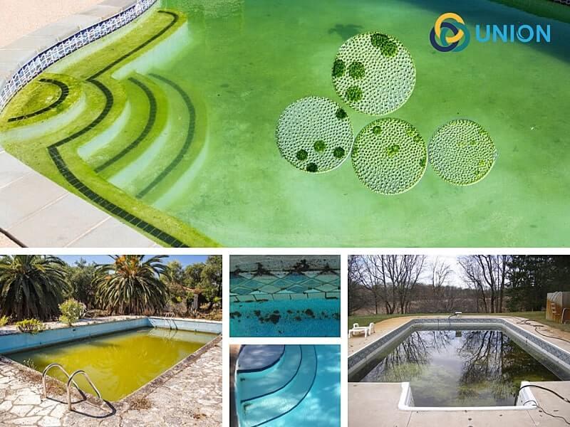Nhận biết nước bị rêu tảo thế nào